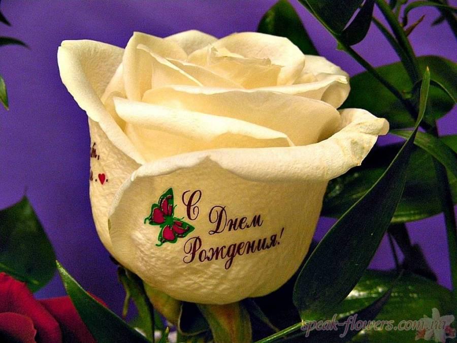 Картинки цветы для девушки с надписями, картинки пока картинка